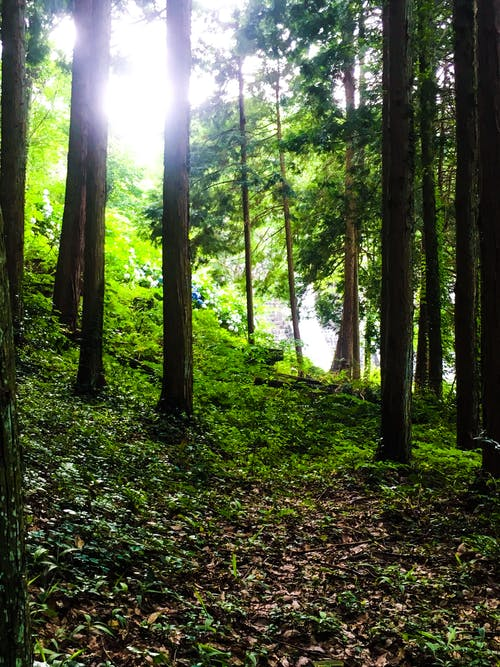 Free stock photo of forest, nature, sunlight, trees