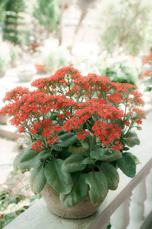 Fotobanka sbezplatnými fotkami na tému botanický, črepníková rastlina, dekorácia, flóra