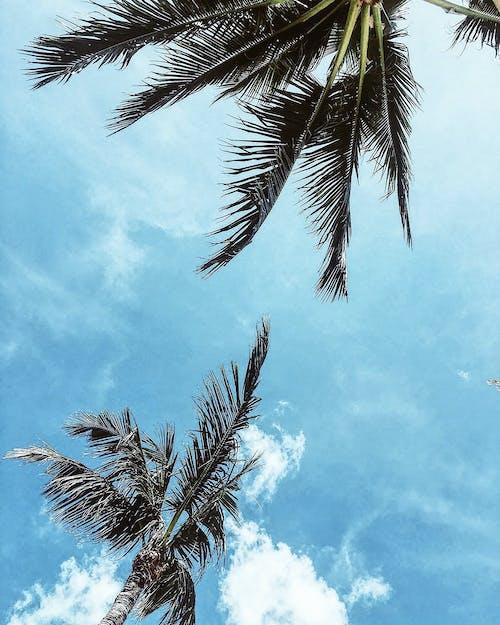 Бесплатное стоковое фото с деревья, дневное время, идиллический, кокосовые пальмы