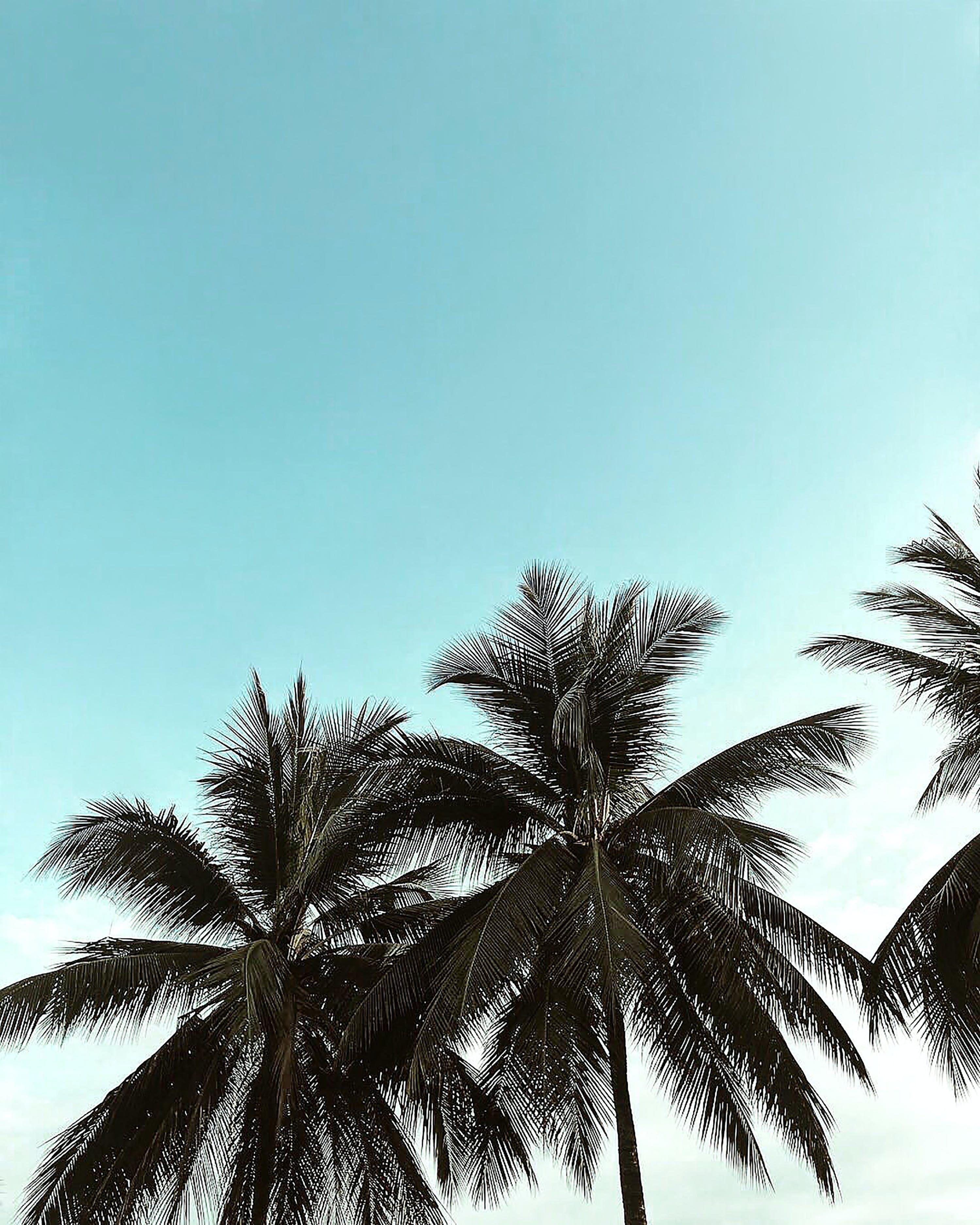 Ingyenes stockfotó egzotikus, homok, kókuszdió, nap témában