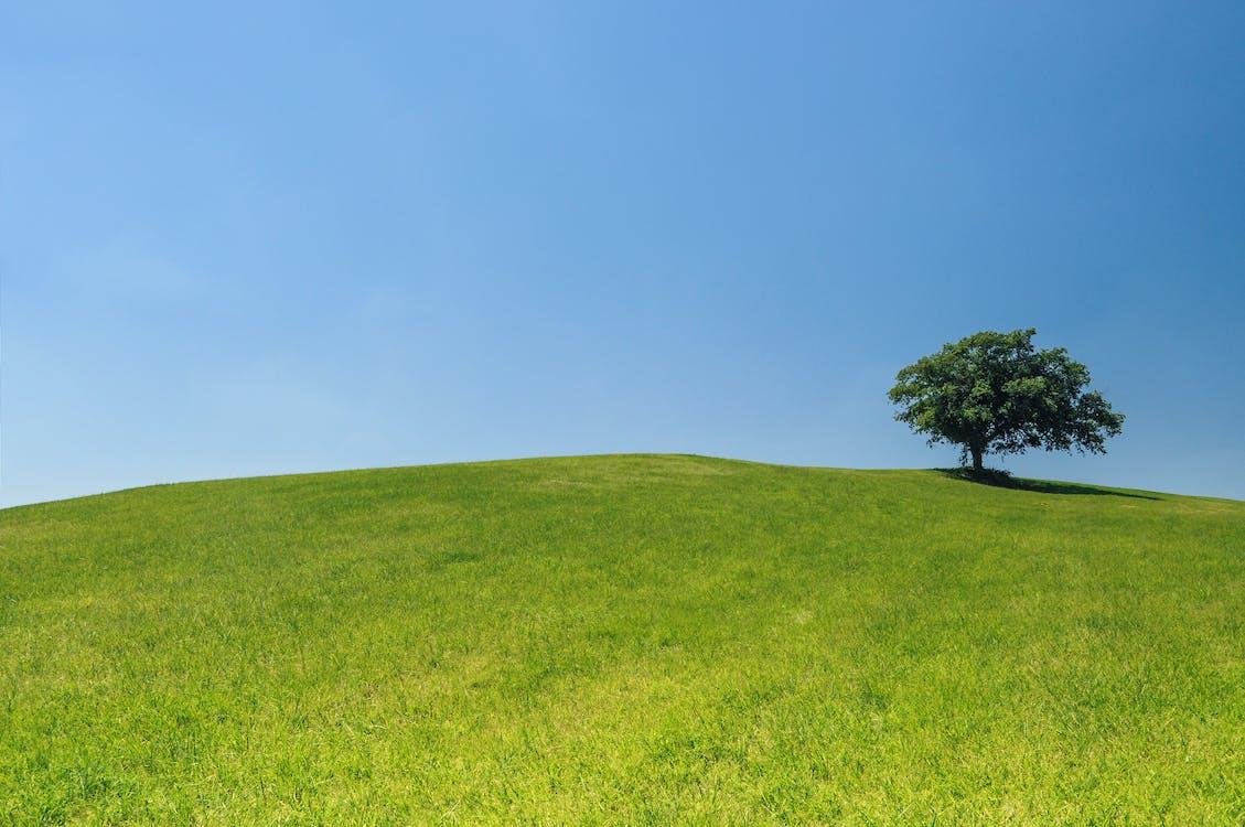 cây, cô đơn, màu xanh lá