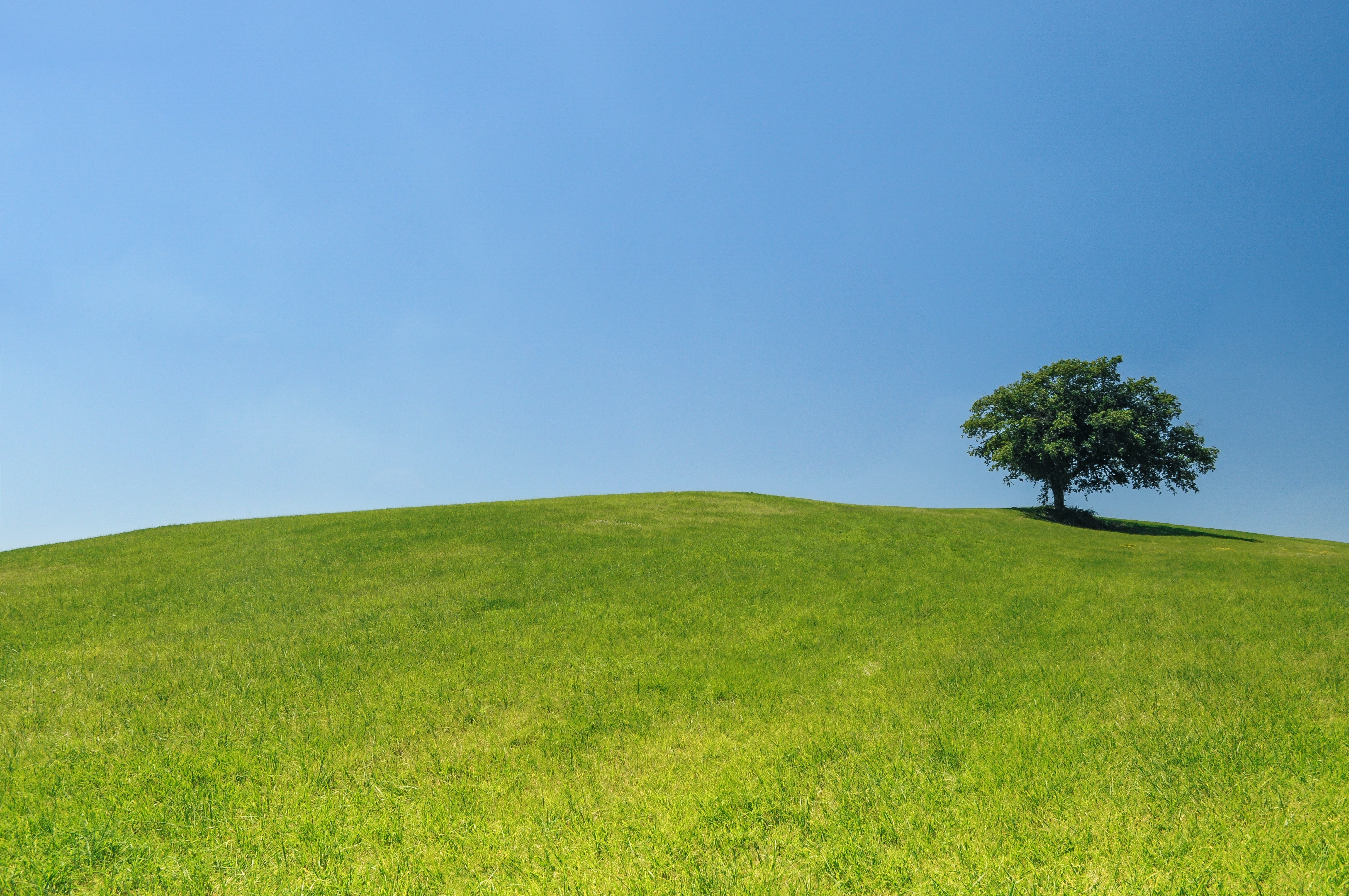 Free stock photo of eco green hill for Meadow house