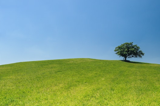 Free stock photo of hill, meadow, tree, green