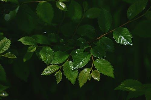 Macro Photograph of Green Leaves
