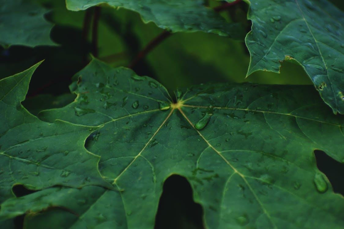 kastehelmet, kasvikunta, lähikuva