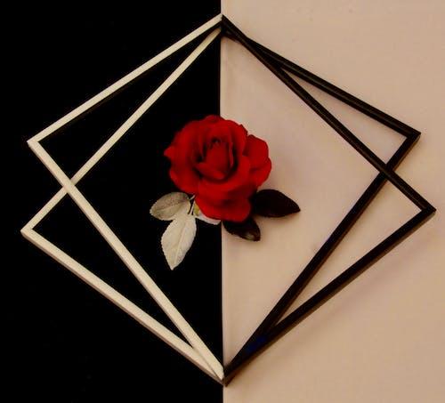 Základová fotografie zdarma na téma symetrie