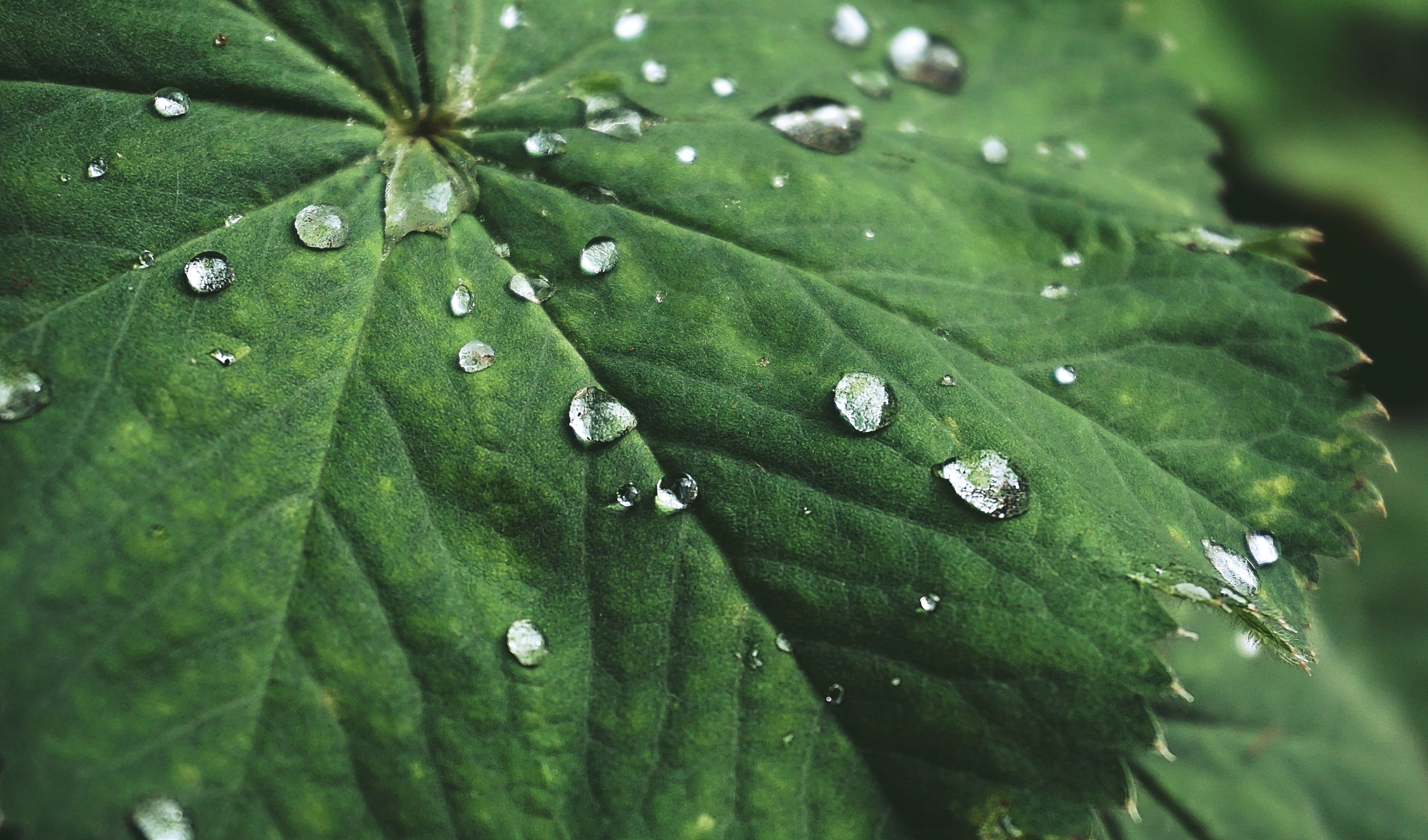 나뭇잎, 녹색, 비, 빗방울의 무료 스톡 사진