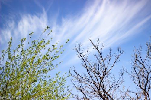 天性, 天空, 樹, 樹枝 的 免费素材照片