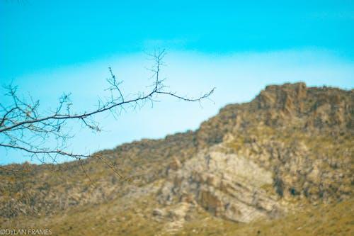 #性质, 山, 樹枝, 美在自然中 的 免费素材照片