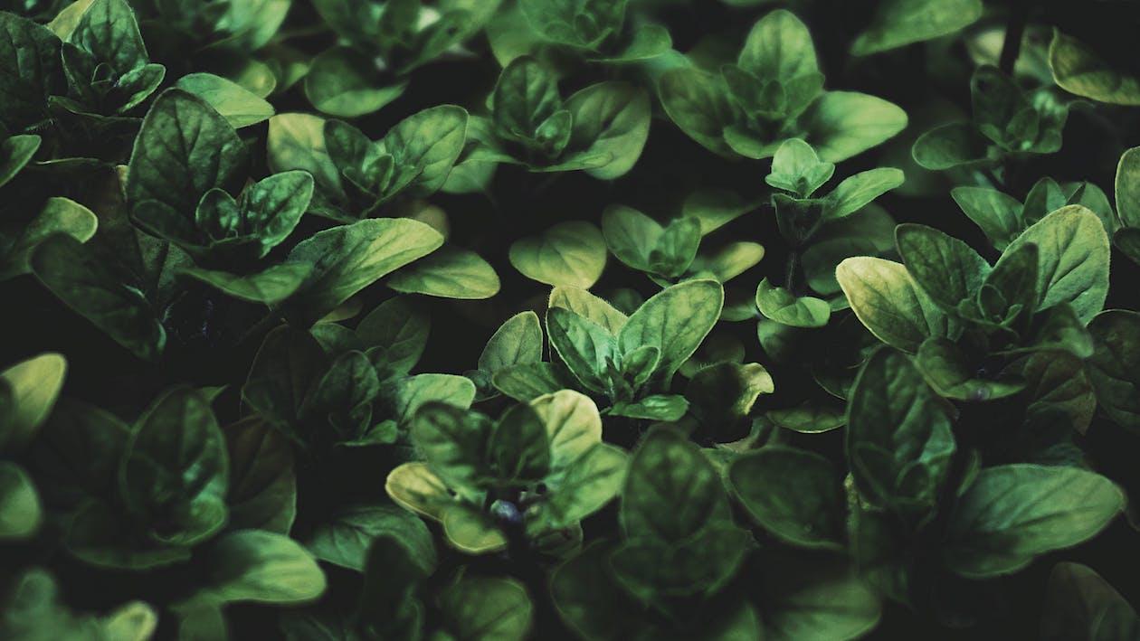 Bahçe, bitkibilim, bitkiler