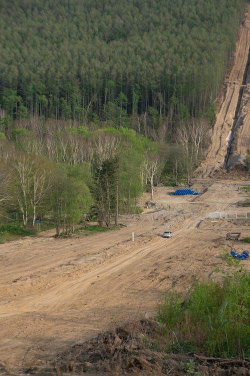 вырубка, лес, トリップ, 一人での無料の写真素材