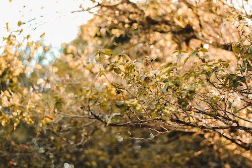 Immagine gratuita di albero, concentrarsi, desfoque, foco