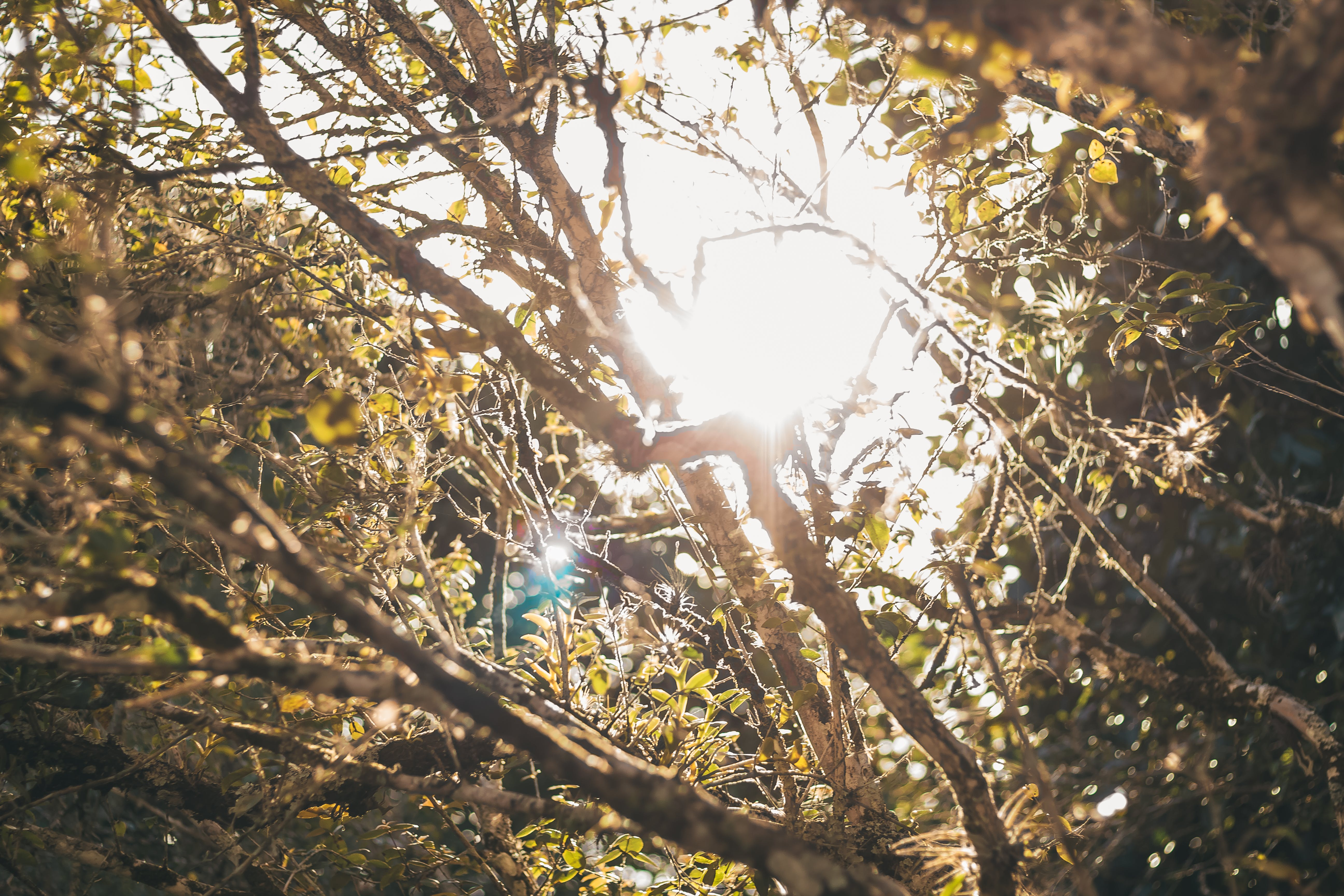 Free stock photo of flower, forest, sun, sunset