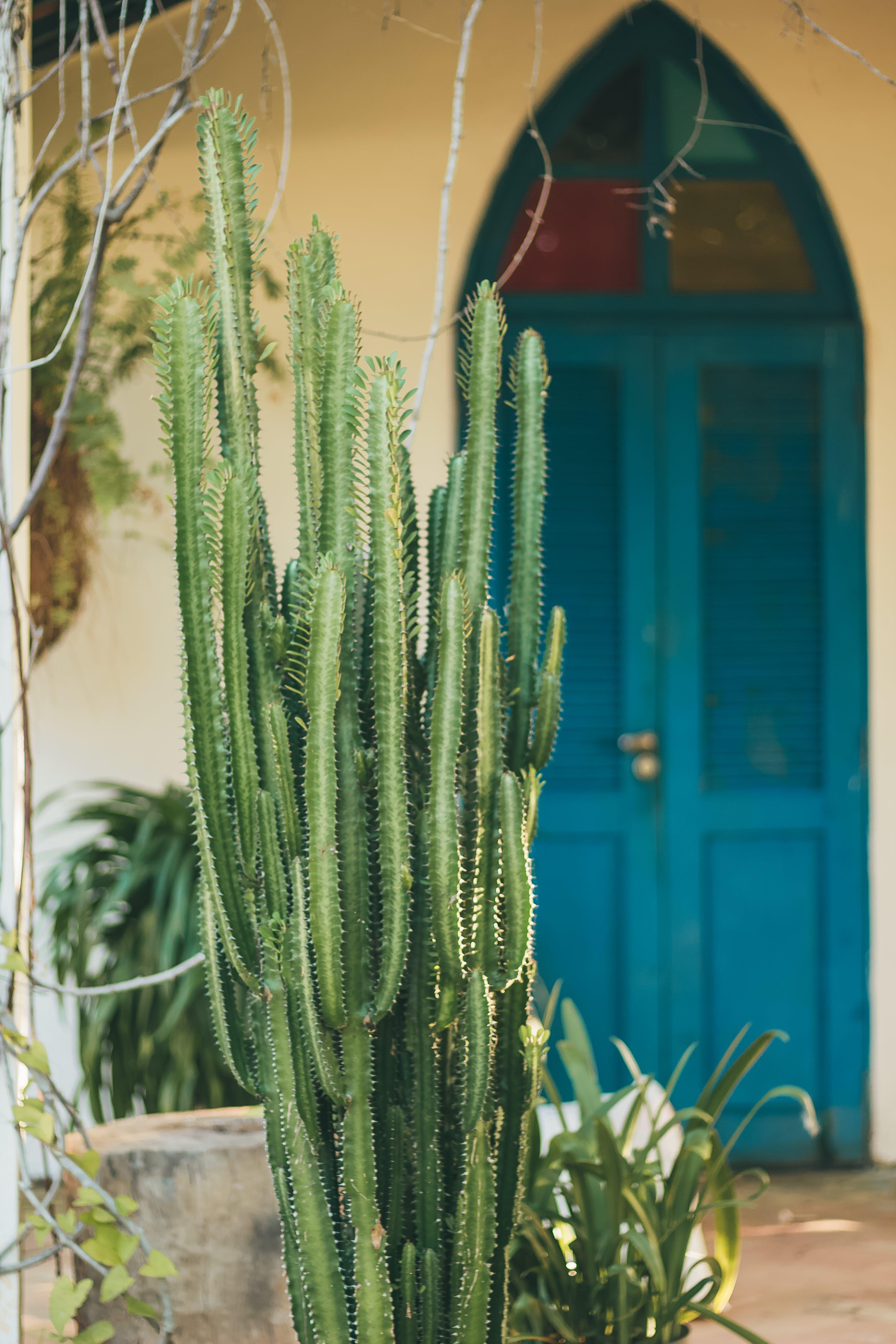 Free stock photo of boho, cacto, cactus, colors