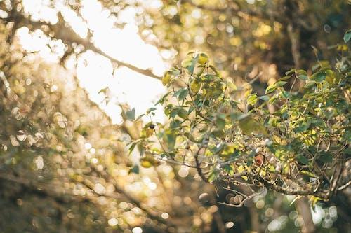 Základová fotografie zdarma na téma kytka, slunce, západ slunce