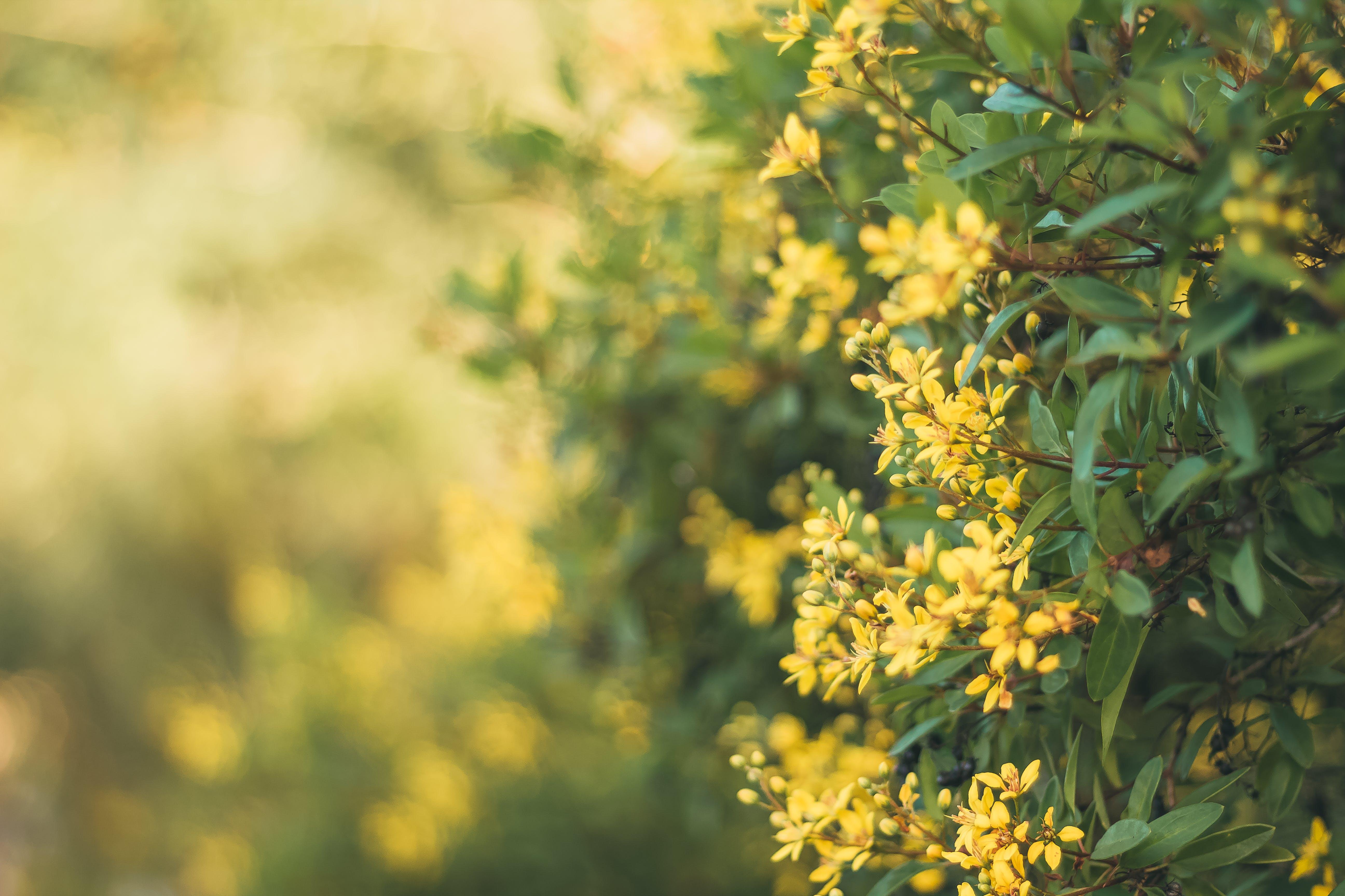 Free stock photo of 50mm, background, bali, bg