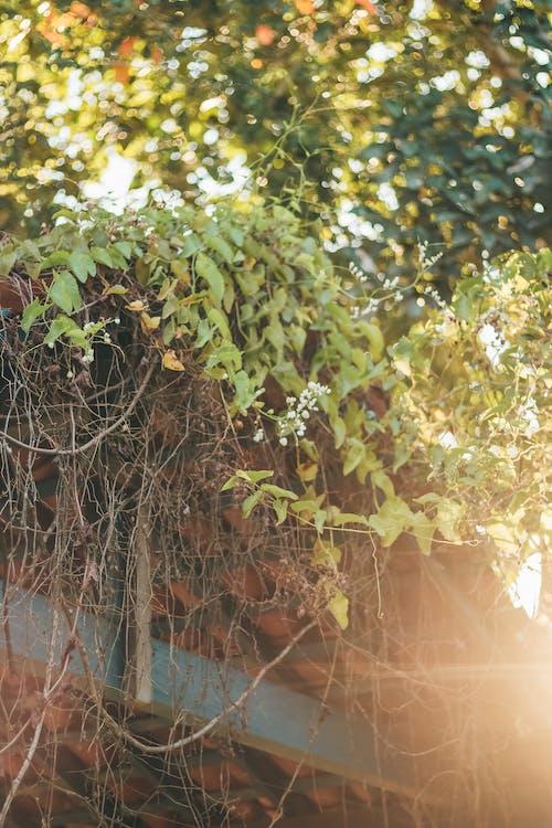 Základová fotografie zdarma na téma doma, klid, květiny, kytka