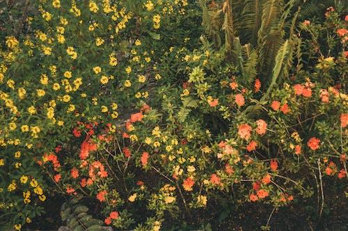 Základová fotografie zdarma na téma barevný, květiny, kytka, les