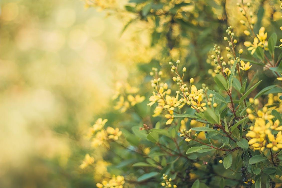 bg, fiore, giallo