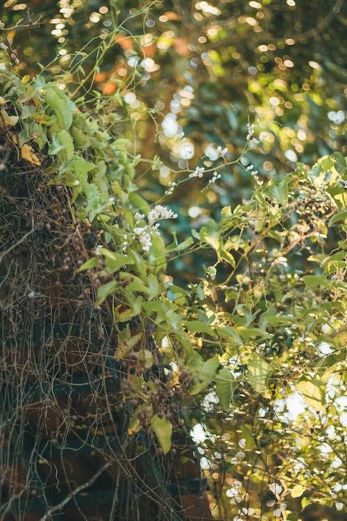 Fotos de stock gratuitas de desfoque, naturaleza, verde