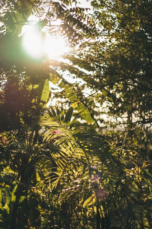 Sun Rays Coming Through Different Green Plants