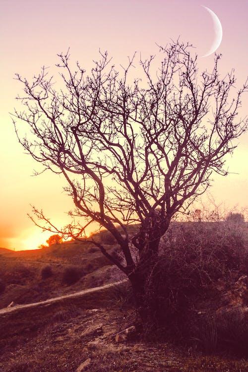 #doğa, Ay ışığı, cezayir, eski içeren Ücretsiz stok fotoğraf