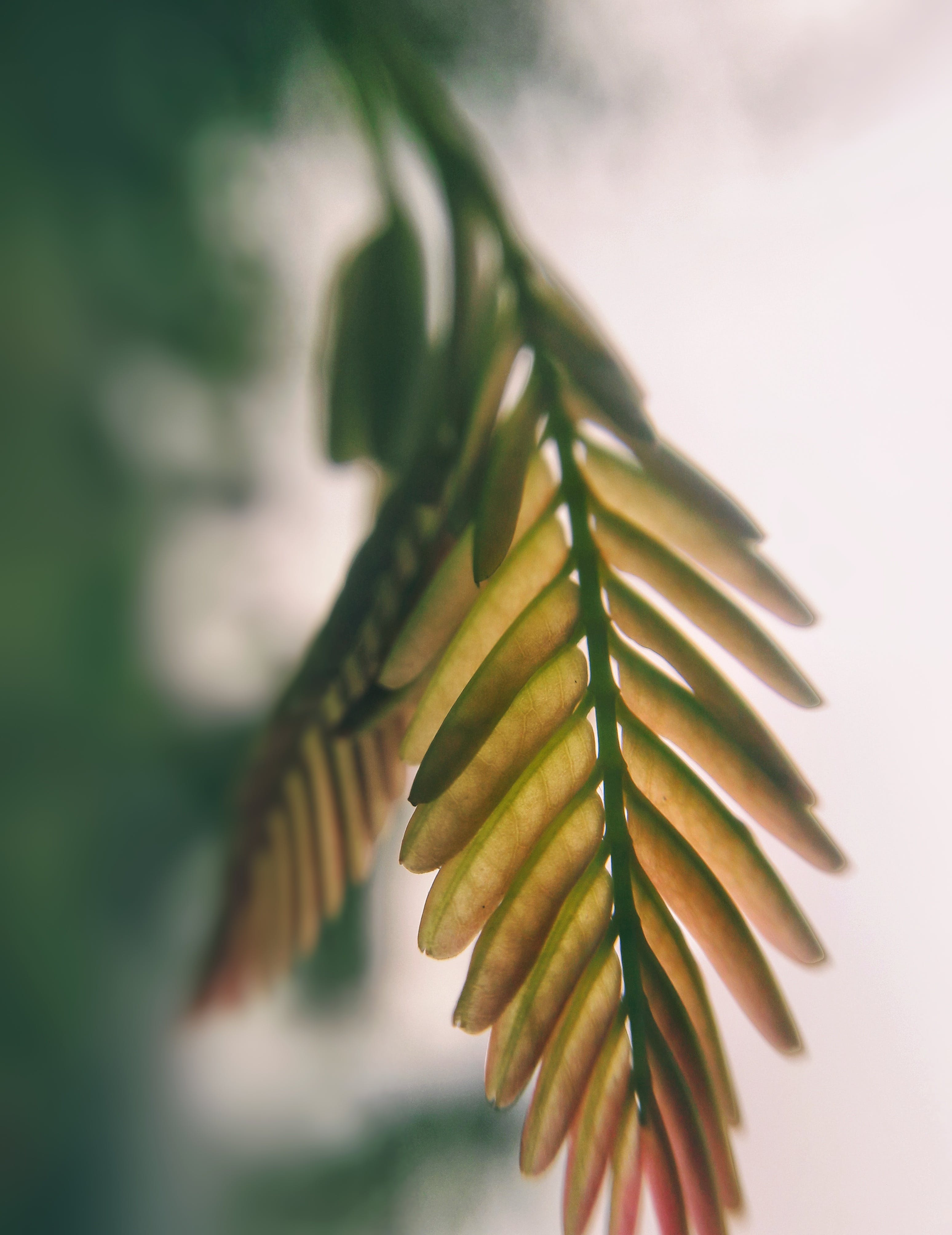 Brown Fern Leaves