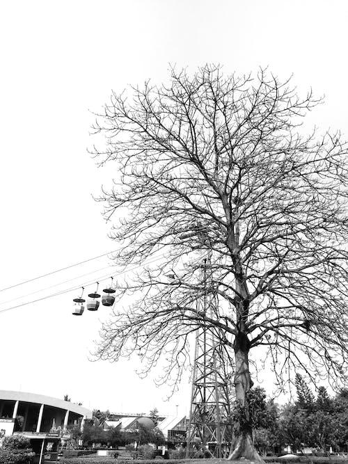 Безкоштовне стокове фото на тему «канатна дорога»
