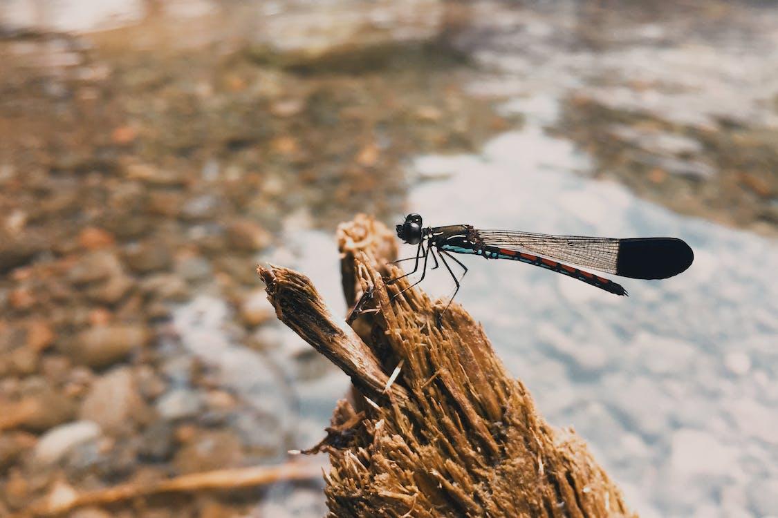 Green Dragonfly on Tree Branch