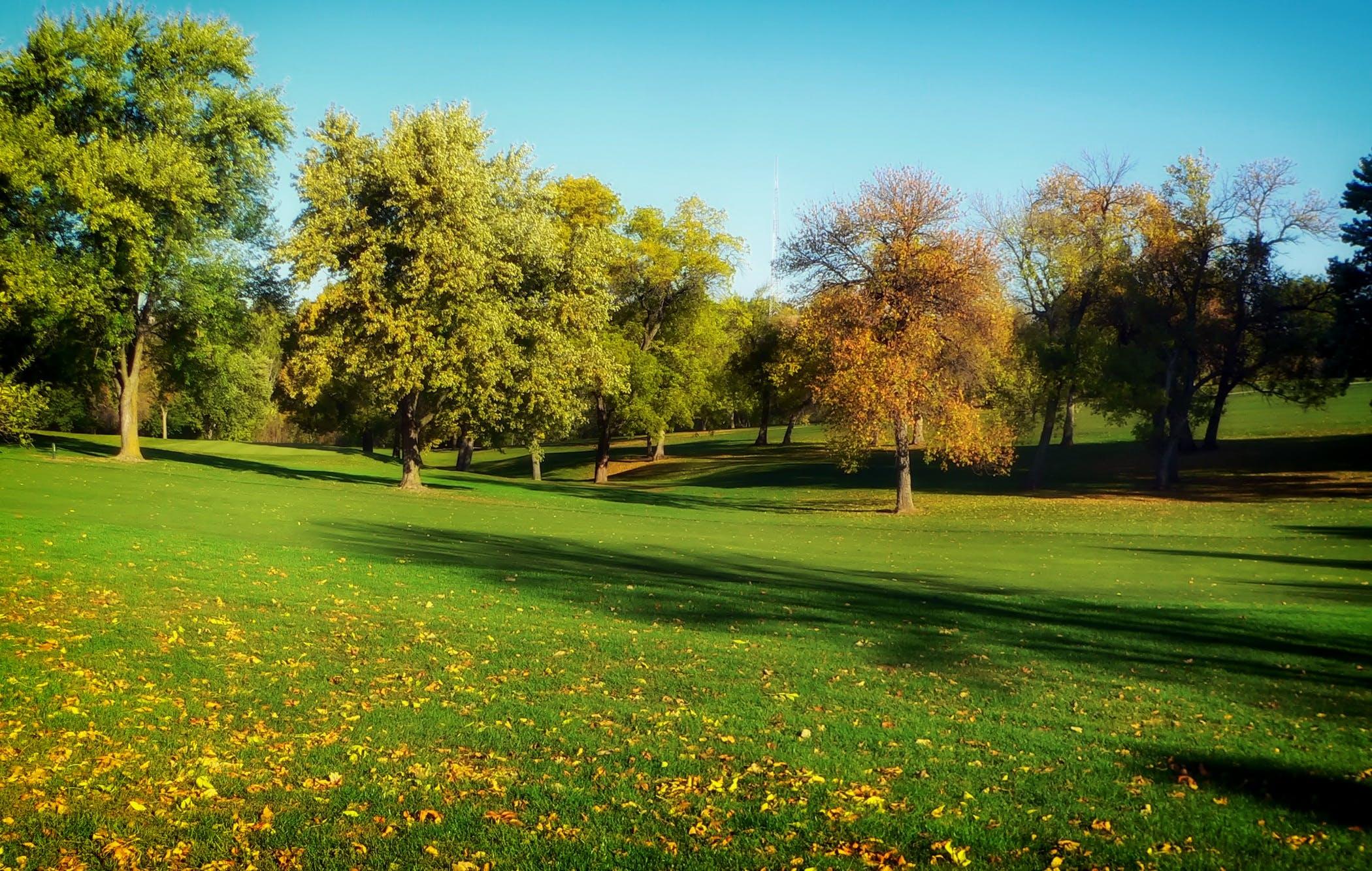 golf, halaman rumput, kebun