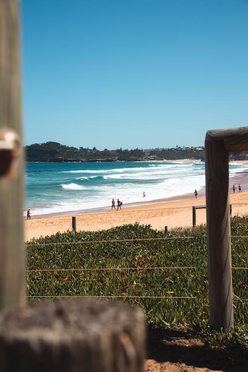 Foto d'estoc gratuïta de Austràlia, caminar, fer surf, gent