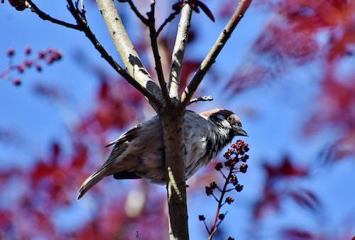 คลังภาพถ่ายฟรี ของ นก, นกกระจอก, นกตัวเล็ก, สัตว์