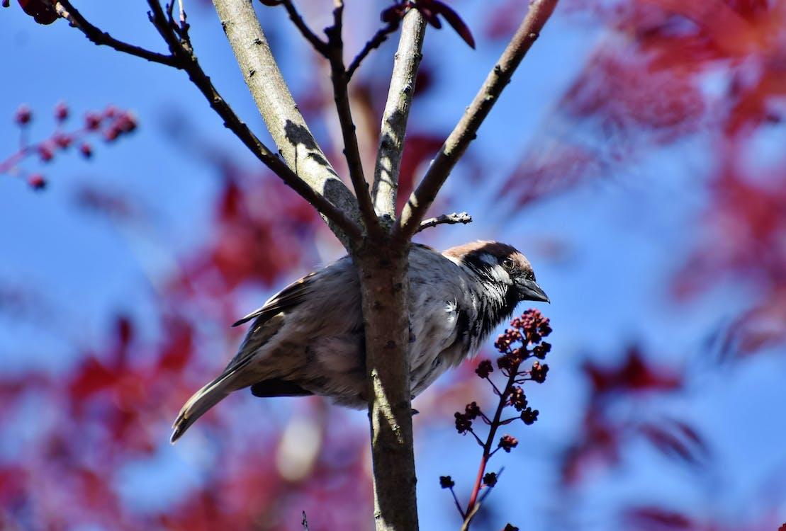 นก, นกกระจอก, นกตัวเล็ก