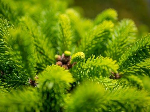 Ilmainen kuvapankkikuva tunnisteilla aurinkoinen, kasvi, kevyt, makro