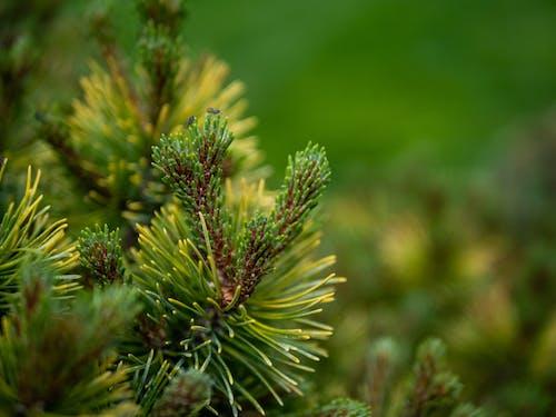 Ilmainen kuvapankkikuva tunnisteilla bokeh, hyönteinen, kärpänen, kärpäset