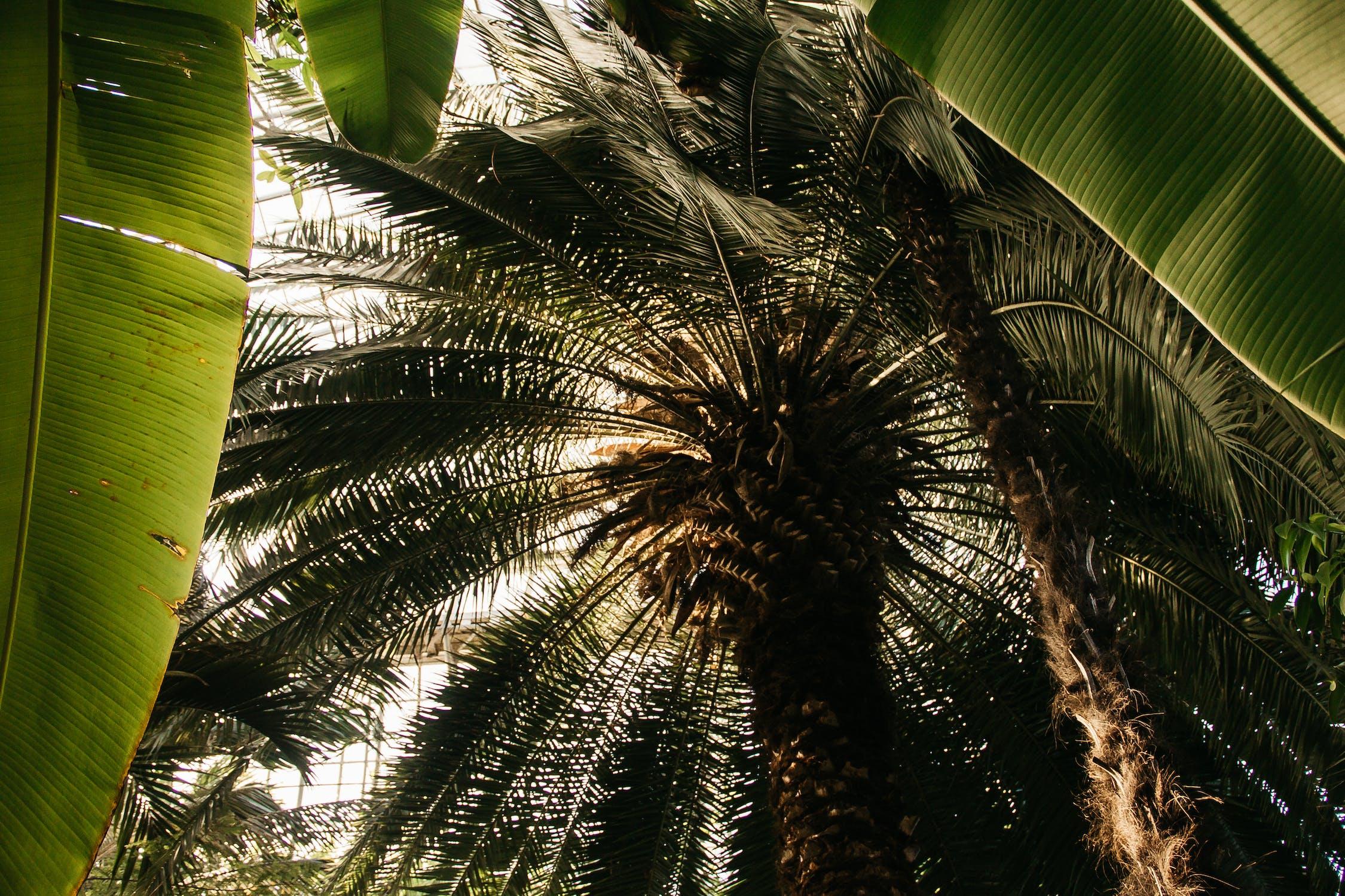 тому времени фото папоротники пальмы осуществления процесса, необходимо