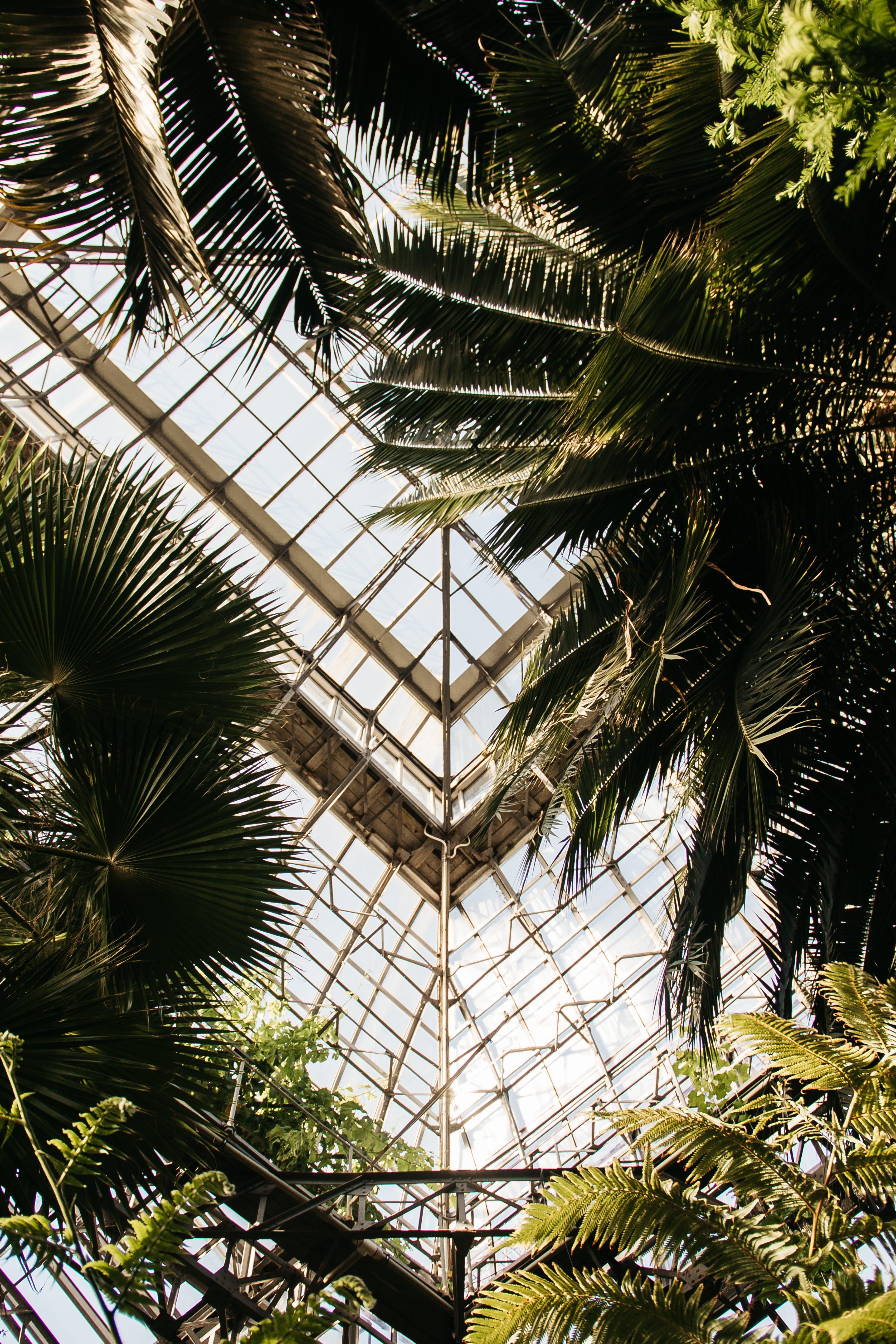 Kostenloses Stock Foto zu architektur, baum, bäume, blatt