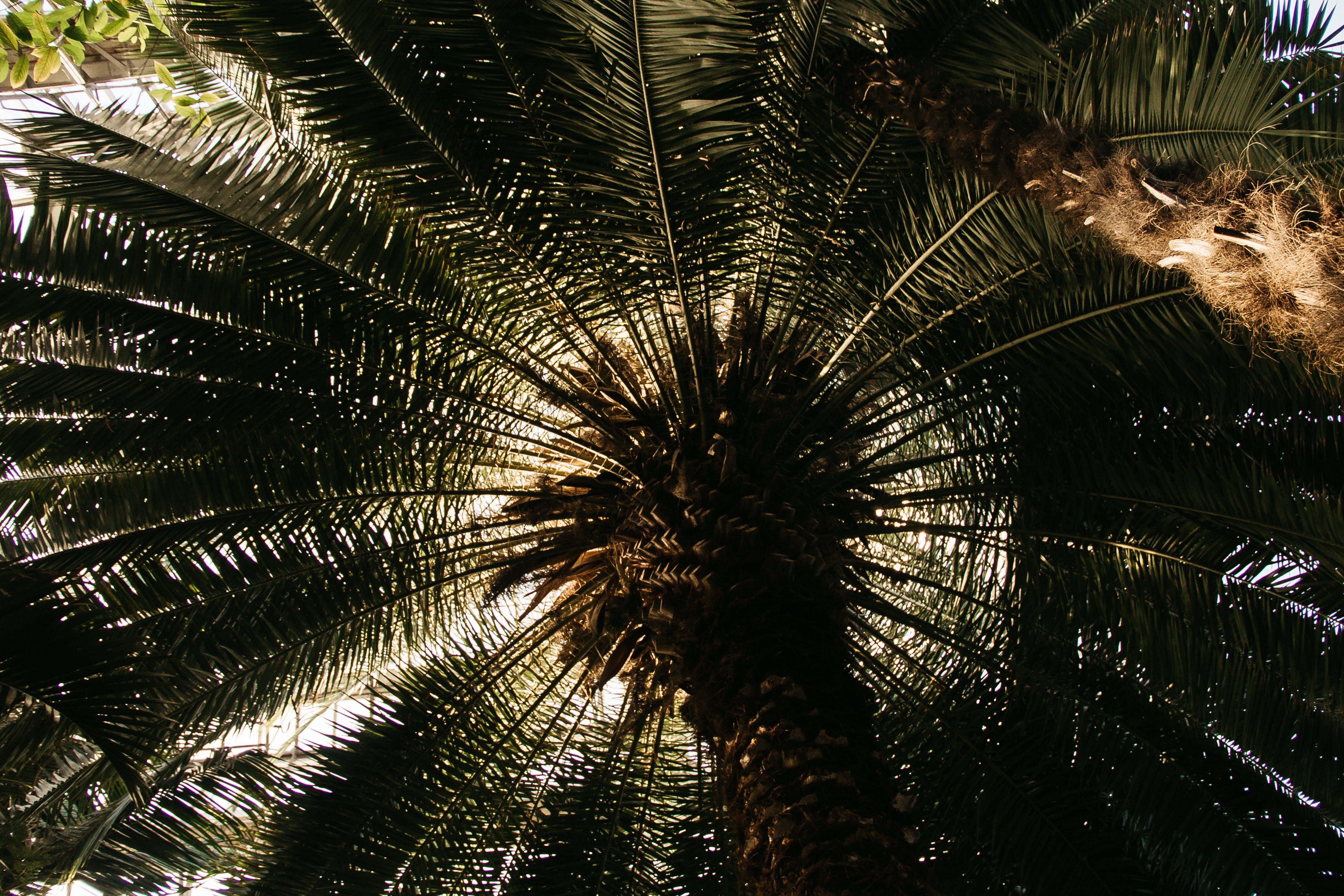 Gratis arkivbilde med anlegg, kokosnøttre, tre
