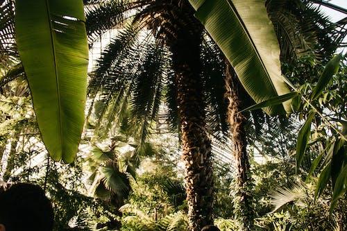 Foto d'estoc gratuïta de arbres, cocoters, creixement, fulles