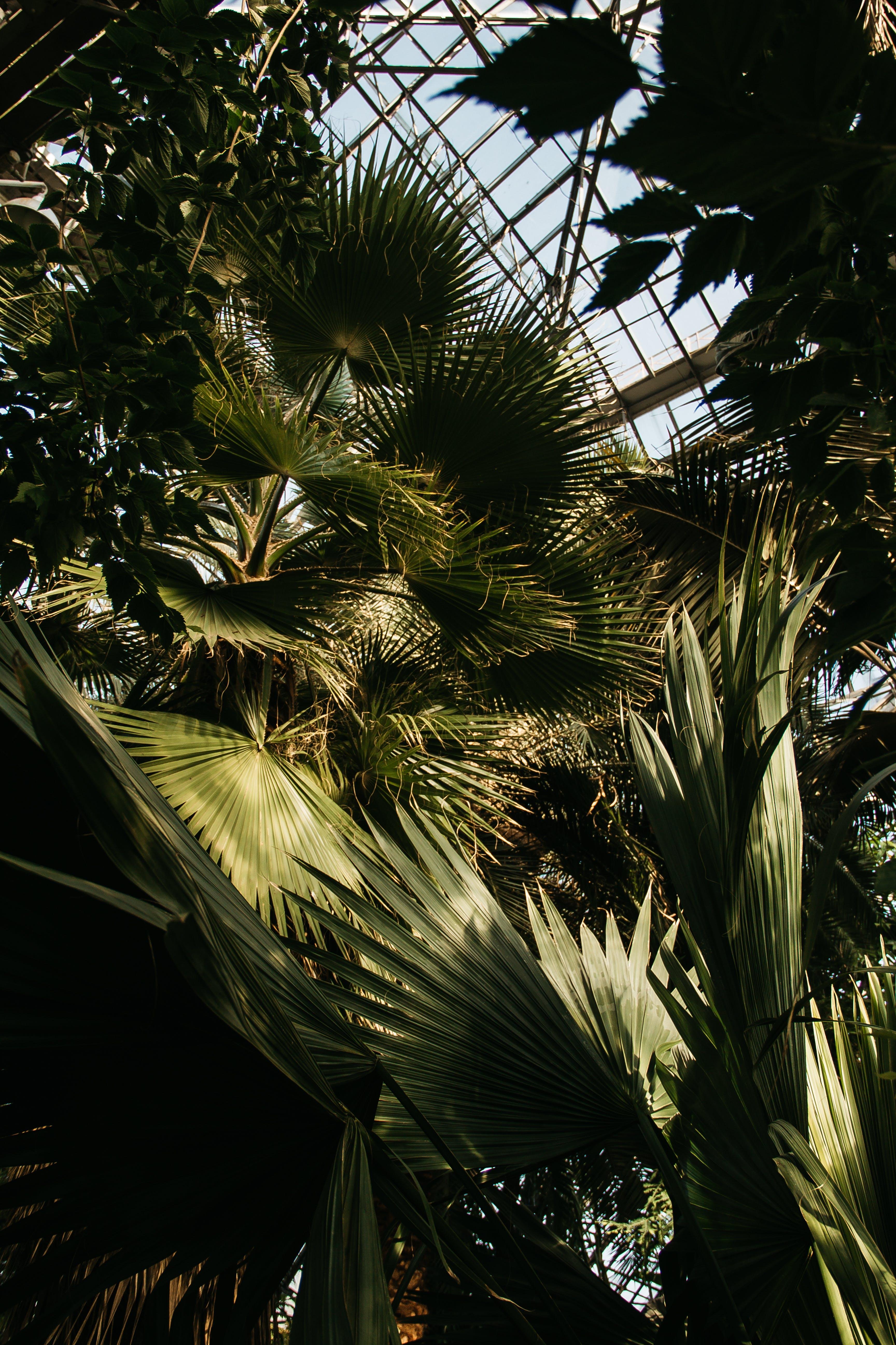 Kostenloses Stock Foto zu baum, bäume, blatt, blätter