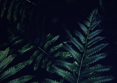 Green Fern Plants