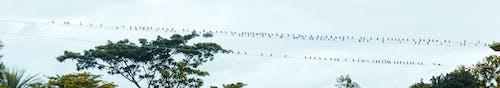 孟加拉國, 巨大的, 樹, 鳥 的 免費圖庫相片