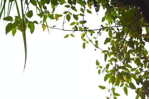 Foto d'estoc gratuïta de #naturalesa, arbre, bangladesh, frontera