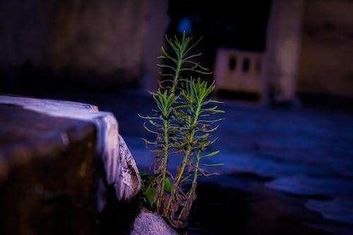 Gratis arkivbilde med baklys, kveld, vannplante