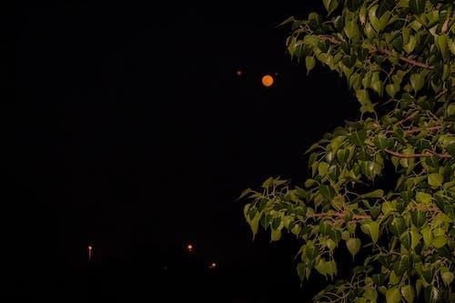 Gratis arkivbilde med blader, måne, mørk, natt