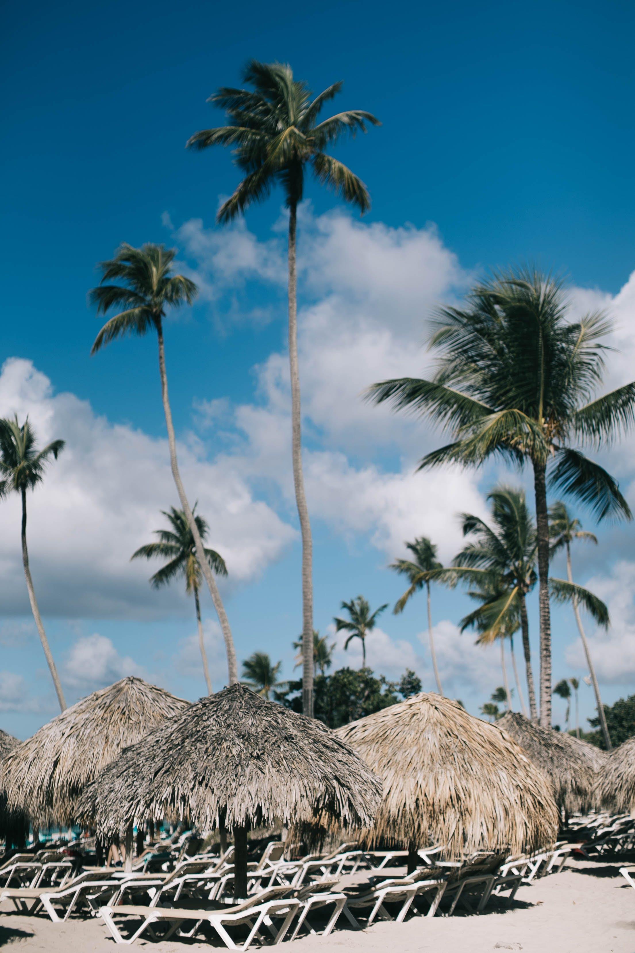 Základová fotografie zdarma na téma kokosové palmy, letovisko, nipa chaty, palmy