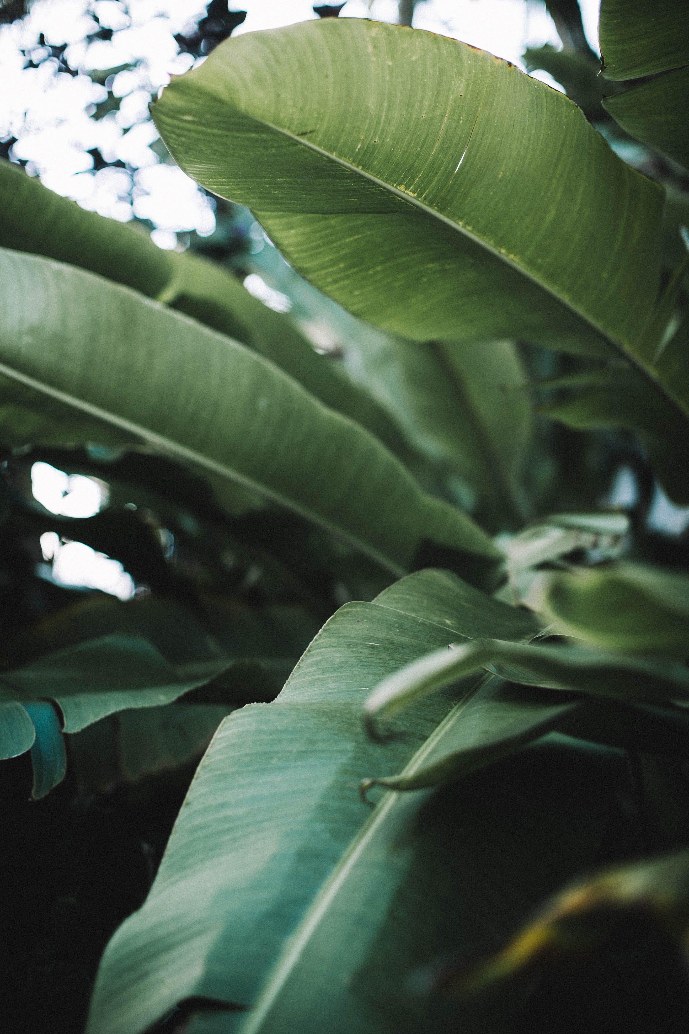 Darmowe zdjęcie z galerii z liście, roślina, zbliżenie, zielony