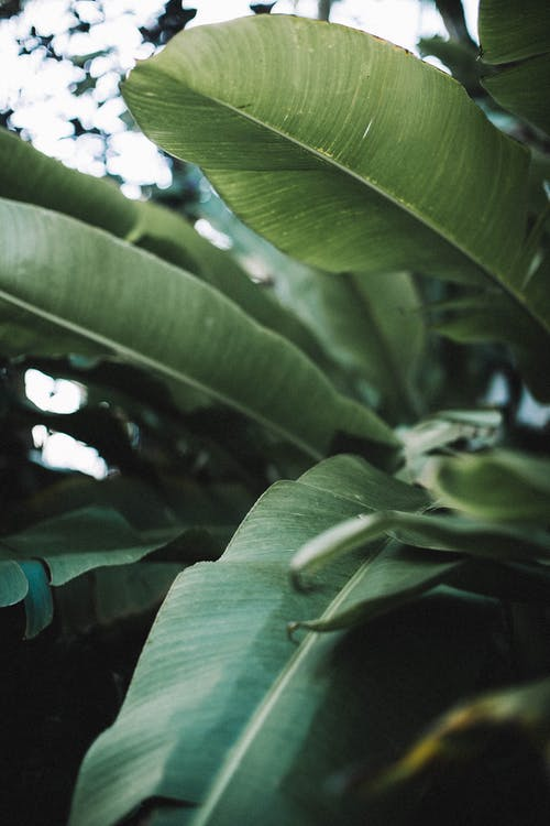 blätter, grün, nahansicht