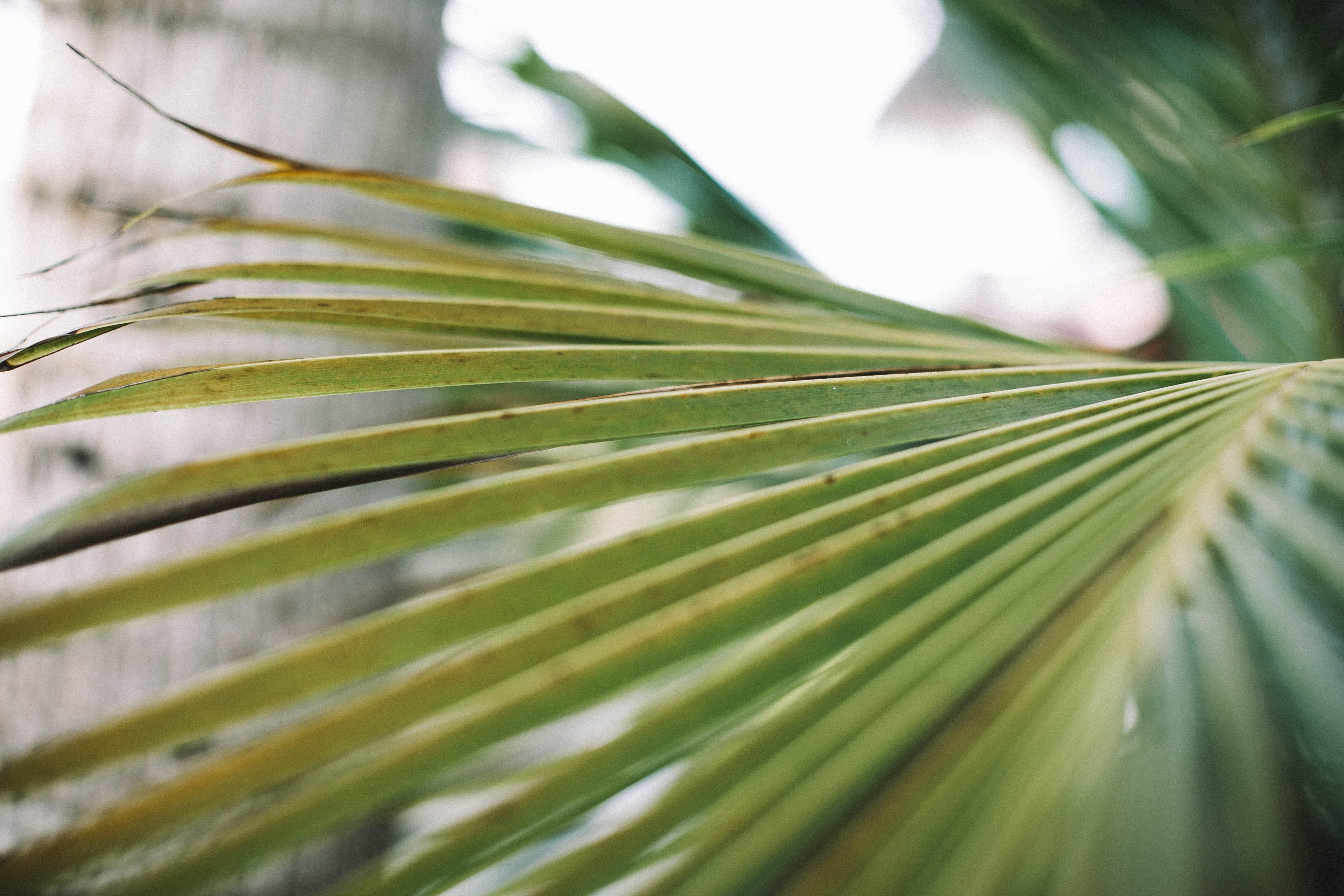 Darmowe zdjęcie z galerii z głębia pola, liść palmy, liście, ogród