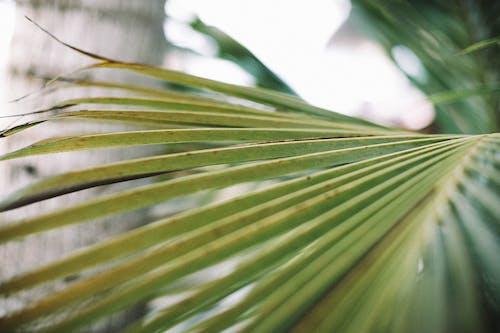 增長, 工厂, 景深, 樹葉 的 免费素材照片